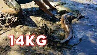 Vật Lộn Bắt Cá  Khổng Lồ | Catching  Monster Fish in Pond
