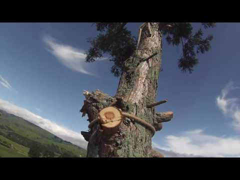 Giant Redwood Tree Removal