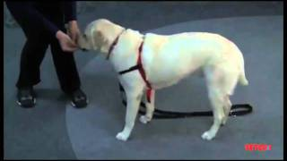 Training Your Dog To Come - Petco How-to