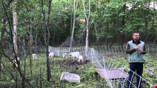 Using Goats to Graze Brush and Invasive Plants