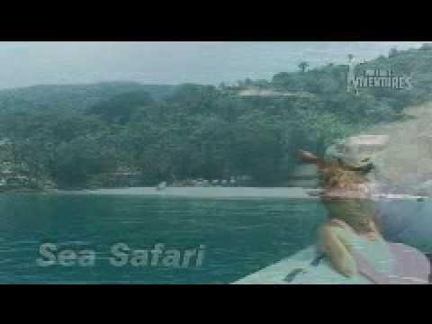 sea safari.mp4