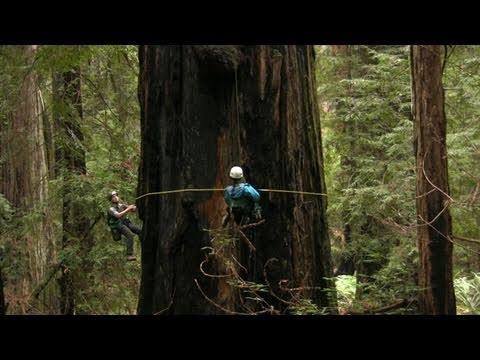 Measuring Redwood Giants: Science on the SPOT