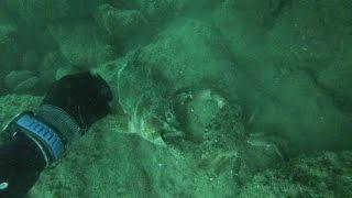 Боевые крабы Черного моря.(Ну с двоими я не справлюсь))) Не ожидал такого увидеть, краб упорно не хотел расставаться со своей добычей,..., 2016-06-28T15:27:56.000Z)