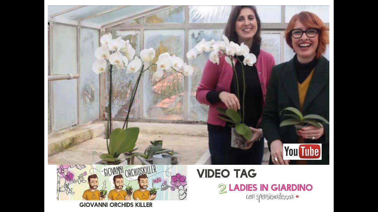 E Coltivare Le Orchidee Phalaenopsis Video Tag 2