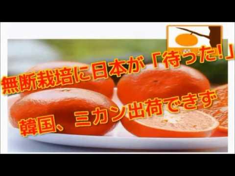 無断栽培に日本が「待った!」韓国、ミカン出荷できず