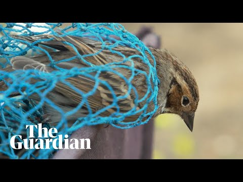Uncaged: saving China's songbirds from the poachers' nets