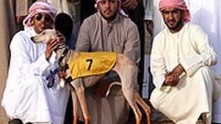 نهائي بطولة الشيخ سلطان بن زايد (شوط الذيخه)