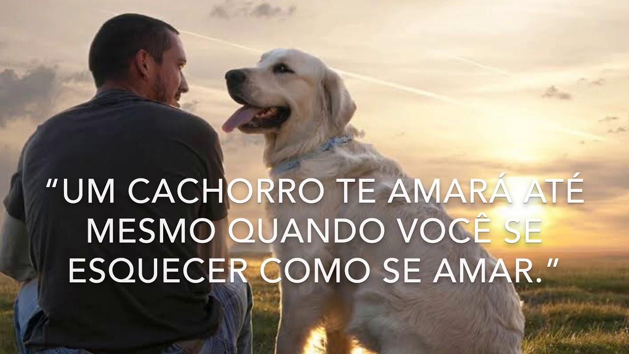 Amigo Frases De Cachorros Sobre Amor E Amizade Youtube