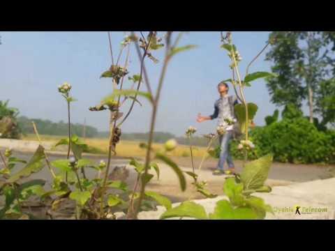 Channa Mereya (Ae Dil Hai Mushkil) - .mp4