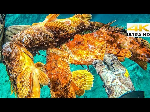 VENOMOUS SCORPION FISH EXTRAVAGANZA🔥 CATCH CLEAN COOK |Spearfishing Life 🇬🇷 [4K]✅