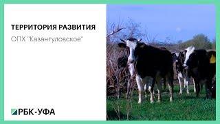 """Территория развития. ОПХ """"Казангуловское"""""""