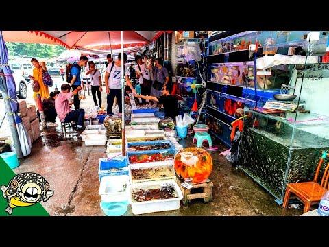 Guangzhou Aquarium Fish Market - Aquarium Co-Op