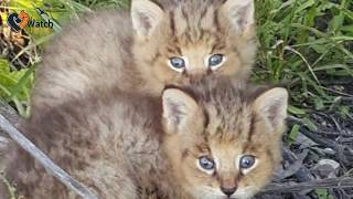 When These Adorable Kittens Were Found by the Road, No One Guessed They Had an Amazing Secret