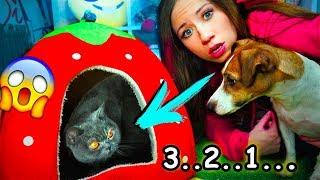 ПЕРВАЯ РЕАКЦИЯ СОБАКИ НА КОШКУ У МЕНЯ ДОМА КОШКА | Elli Di Pets