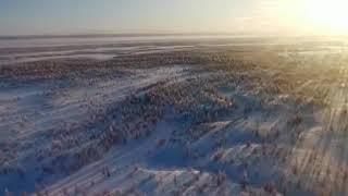 Огромная стая волков в Якутии