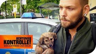 Dreiste Abzocke der Welpenmafia! Illegaler Tierhandel in Berlin | Achtung Kontrolle | kabel eins