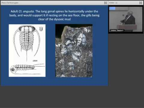London Lecture: The Cambrian Alum Shales of Scandinavia and their Remarkable Trilobites