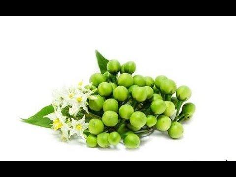 18 สรรพคุณ ประโยชน์ของมะเขือพวง(Health benefit of Turkey berry) ลูกเล็กแต่พลังสารอาหารเกินตัว