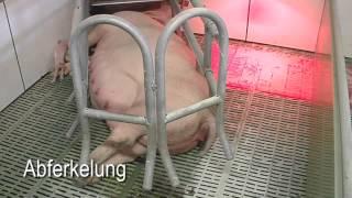 Repeat youtube video Schweinehaltung in Niedersachsen