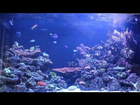 Manhattan Aquariums Nyc Local Fish Store Travel Ep 3