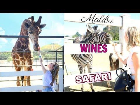 MY MALIBU WINES SAFARI EXPERIENCE! | OhhMyAnnie vlog