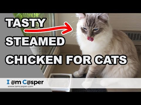 How To Make Homemade Food Our Cats Love In 5 Min (steamed Chicken)