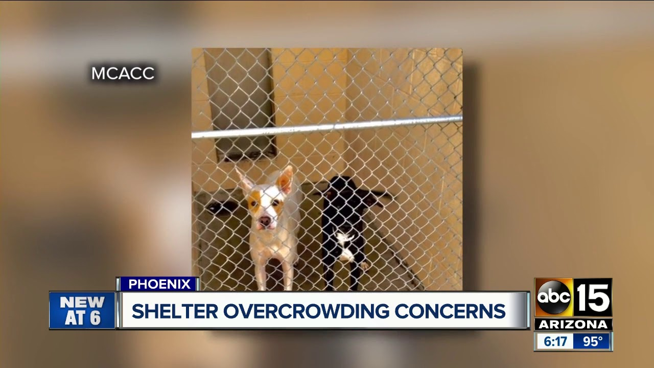 Maricopa county animal shelter dealing with major overcrowding maricopa county animal shelter dealing with major overcrowding again 1betcityfo Gallery