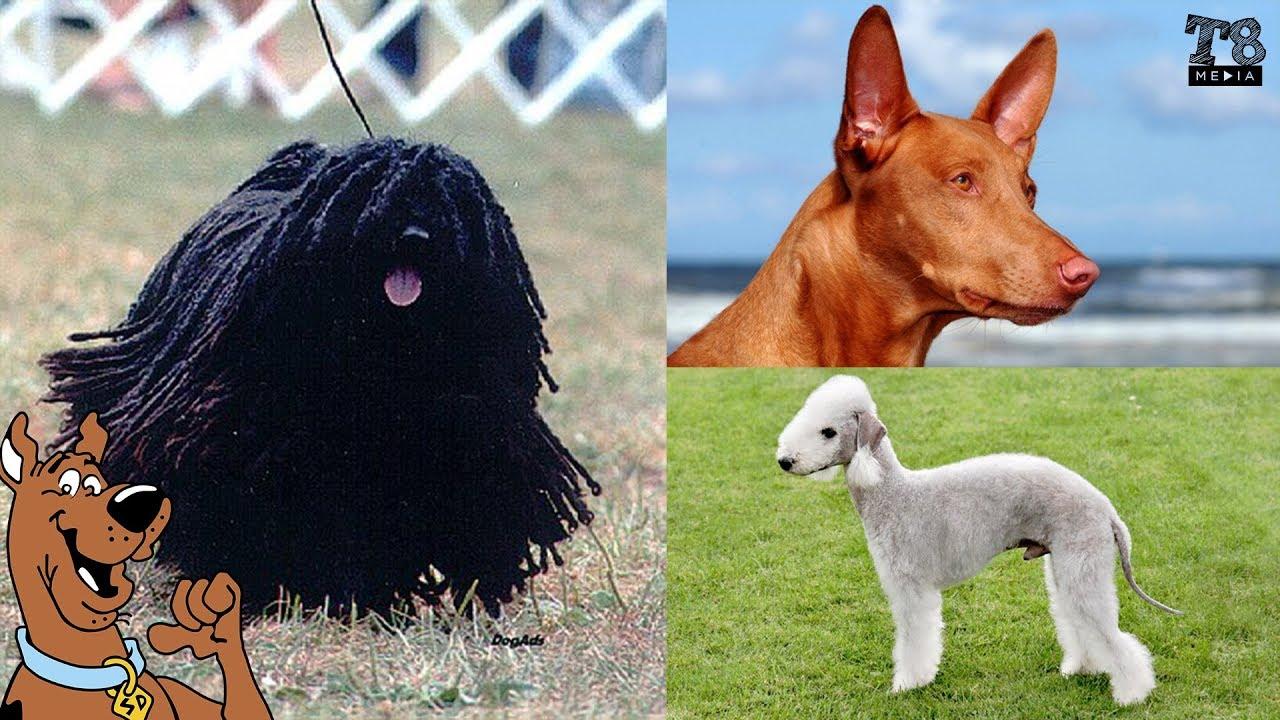 De ce Există Rasele de Câini?
