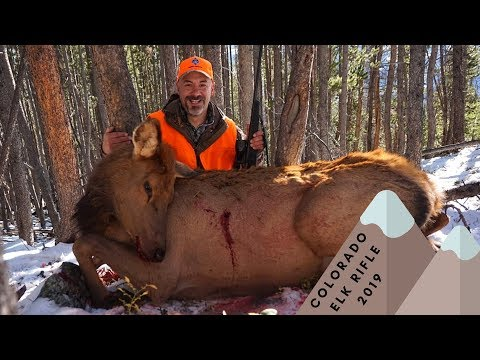 Colorado Elk Rifle Hunting -  Refilling The Freezer!