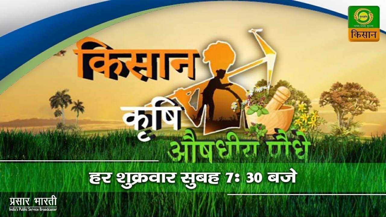 Download किसान , कृषि, औषधिय पौधे   Kisan Krishi Aushadhiya Paudhe   Episode  08   Apr. 09, 2021