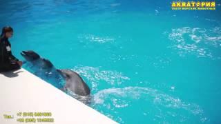 """Театр морских животных """"Акватория"""" (Ялта): представление животных"""