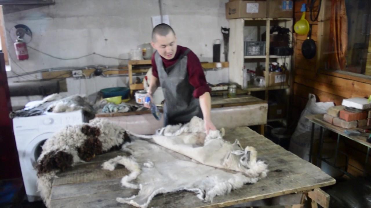 Как выделать шкуру барана в домашних условиях вопрос волнующий. На самом деле выделка овечьих шкур в домашних условиях занятие хоть и.