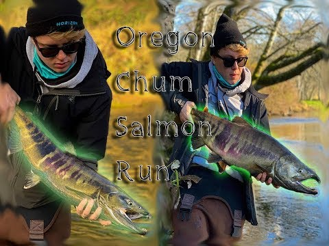 Oregon Fall Chum Salmon Run! (Oregon Fall Salmon Fishing)