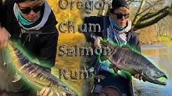 Oregon Fall Chum Salmon Run! (Oregon Fall Salmon Fishing)