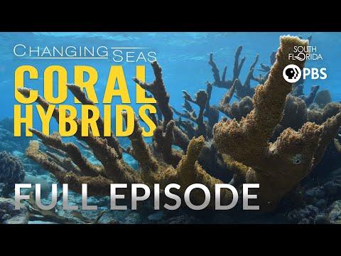 Coral Hybrids - Full Episode
