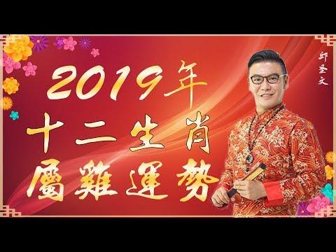 2019年十二生肖属鸡运势