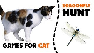 CAT GAMES ★ DRAGONFLY hunt on screen