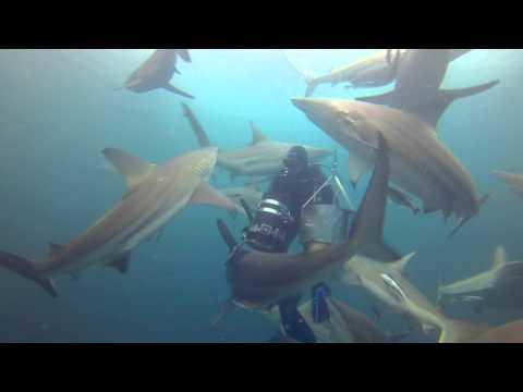Sharkdiving at Aliwal Shoal (Umkomaas, South Africa)