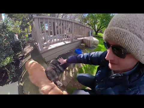 "Niko & Ilsa in ""Dog Music Video GoPro Fusion 360"""
