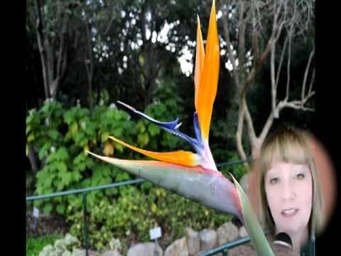 South Africa Botanical Gardens -- Kirstenbosch Gardens Cape Town [Boomer and Senior Travel TV #68]