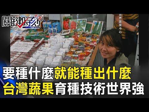 要種什麼就能種出什麼 台灣蔬果育種技術世界強!!關鍵時刻20181207-6 林佳新