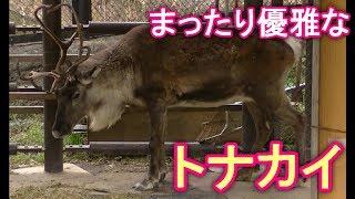 チャンネル登録→http://ur0.biz/JBuH 【東山動植物園】再生リスト→https...