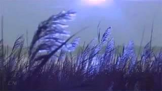 Вечерняя серенада Ф. Шуберта. Перевод с немецкого языка на русский Елены Кордиковой