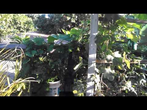 Roof garden in Waipahu Hawaii