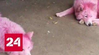 Под Геленджиком обнаружили двух розовых собак
