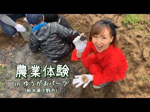 栃木県下野市で農業体験! じゃがいもを植えてみよう!
