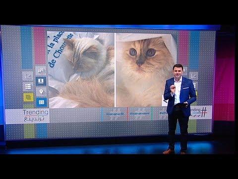 -شوبيت-.. قطة محظوظة ترث جزءا من ثروة مؤسس دار شانيل البالغة 200 مليون دولار #بي_بي_سي_ترندينغ  - نشر قبل 2 ساعة