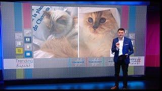 """""""شوبيت"""".. قطة محظوظة ترث جزءا من ثروة مؤسس دار شانيل البالغة 200 مليون دولار #بي_بي_سي_ترندينغ"""