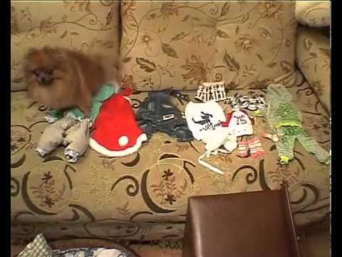 Одежда собак шьем сами 57