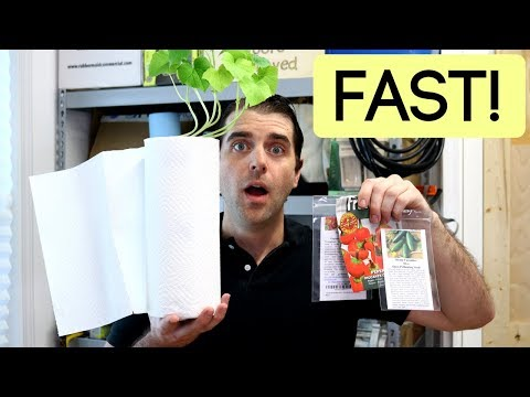 How To Grow Seeds Fast Indoors | Paper Towel Germination & 10 Day Seedling Update EASY